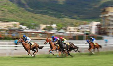 horse racing freebet